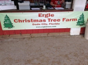 Ergle Christmas Tree Farm.Visiting A Christmas Tree Farm In Florida